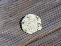 海壳在阳光下在一个木大阳台 库存照片