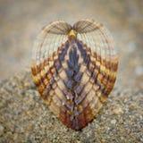 海壳对称在海滩的 库存照片