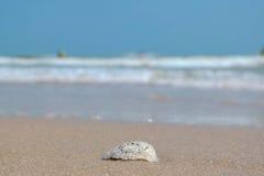 海壳有被弄脏的背景 库存图片