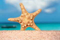 海壳海星在热带沙子绿松石加勒比暑假旅行 免版税图库摄影