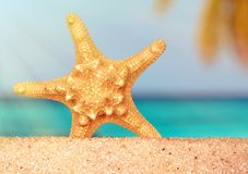 海壳海星在热带沙子绿松石加勒比暑假旅行 库存图片