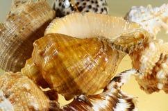 海壳照片  库存图片