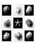 海壳的区别类型 免版税库存图片
