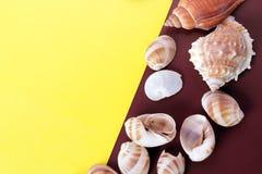 海壳背景 免版税库存照片