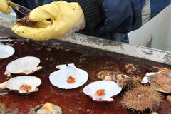 海寿司,冰岛 免版税库存照片