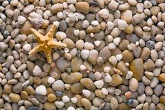 海小卵石和贝壳背景、自然海滨石头和海星 免版税库存图片