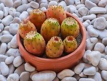 海小卵石和陶瓷碗筷用仙人掌 仍然1寿命 免版税库存图片