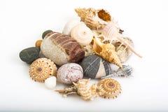 海小卵石和贝壳在白色背景 免版税库存照片