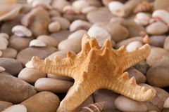 海小卵石和贝壳背景、自然海滨石头和海星 库存图片