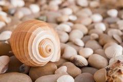 海小卵石背景,自然海滨石头 库存图片