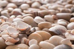 海小卵石背景,自然海滨石头 库存照片