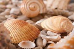 海小卵石背景,自然海滨石头 免版税图库摄影
