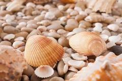 海小卵石背景,自然海滨石头 免版税库存照片