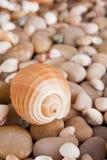 海小卵石背景,自然海滨石头 图库摄影
