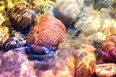 海小卵石,石头和岩石,放置在海滩沙子 免版税库存图片