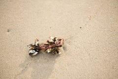海居住的眼镜海 免版税库存图片