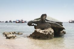 海岛乌龟 图库摄影