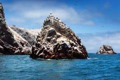 海岛和鸟在晴天 库存照片