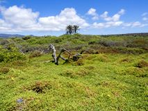 海岛圣克鲁斯,加拉帕戈斯,厄瓜多尔的沿海群落生境 免版税库存图片