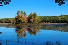 海岛在池塘 库存照片
