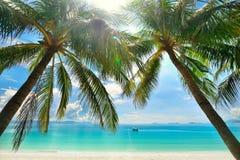 海岛天堂-垂悬在一个含沙白色海滩的棕榈树 免版税库存图片