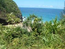 海岛密林 库存照片
