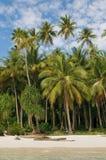 海岛掌上型计算机海运热带天空的结构树 库存照片