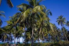海岛棕榈树桑给巴尔 免版税图库摄影