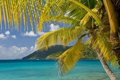 海岛棕榈树 库存图片
