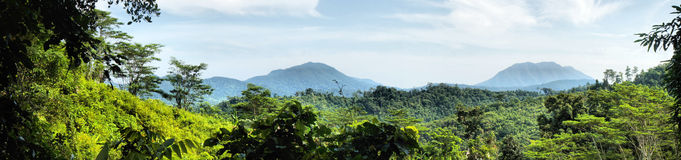 海岛横向palawan全景 库存照片