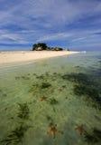 海岛海星 库存图片