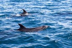 海岛海豚海湾  库存照片
