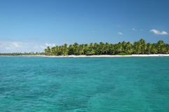海岛海洋热带的棕榈树 免版税库存图片