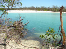 海岛盐水湖美洲红树marco 免版税库存图片
