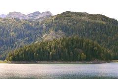海岛盖了杉树 免版税库存照片