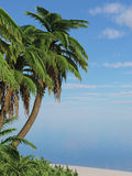 海岛马尔代夫热带的棕榈树 库存图片