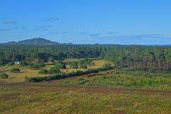 海岛Ile des别针森林地区,有一座山的新喀里多尼亚在背景中 图库摄影