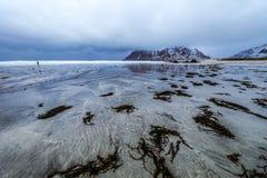 海岛lofoten 美好的挪威春天风景 库存图片