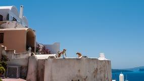海岛oia santorini 希腊 免版税图库摄影