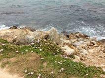 海岩石植物一起共存 库存图片