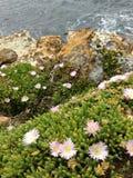 海岩石植物一起共存 免版税库存图片