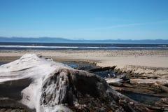海岸俄勒冈太平洋 免版税库存图片