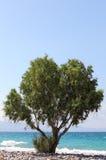 海岸偏僻的结构树 免版税库存图片