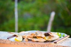 海岸克罗地亚岩石海岛的rab 免版税库存图片