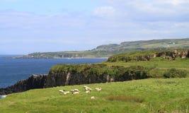 海岸北部的爱尔兰 库存照片