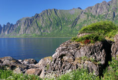 海岸岩石的挪威 免版税库存图片