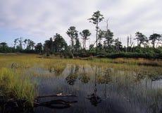 海岸平原池塘 免版税库存照片