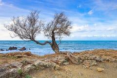 海岸撑柳或落叶灌木结构树、岩石背景的海滩和海洋。 库存照片