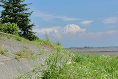 海岸树和草 库存图片