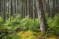 海岸森林雨 免版税图库摄影